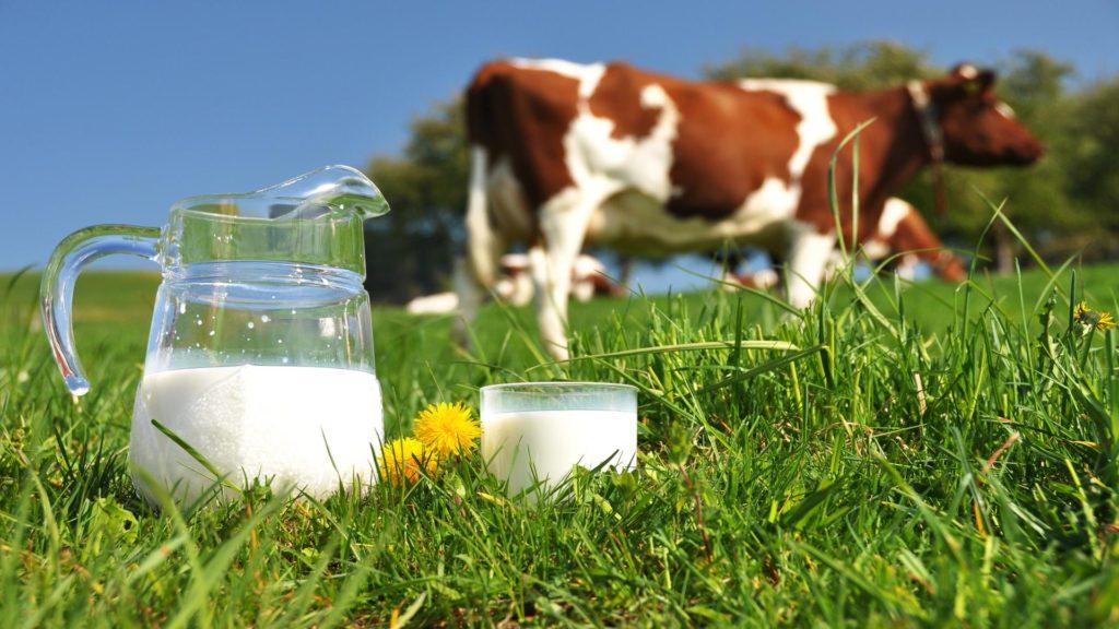 коровье молоко хранение