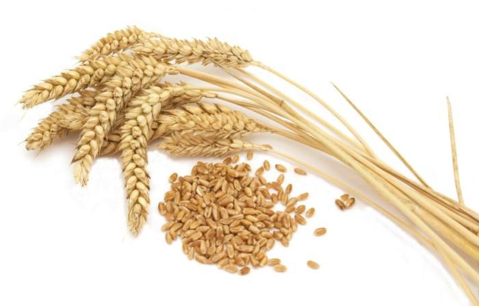 хранение фуражного зерна