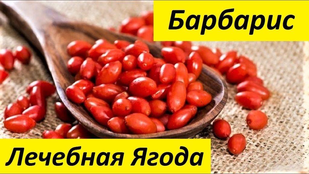 лечебные свойства барбариса
