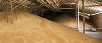 Условия и нормы правильного хранения зерна