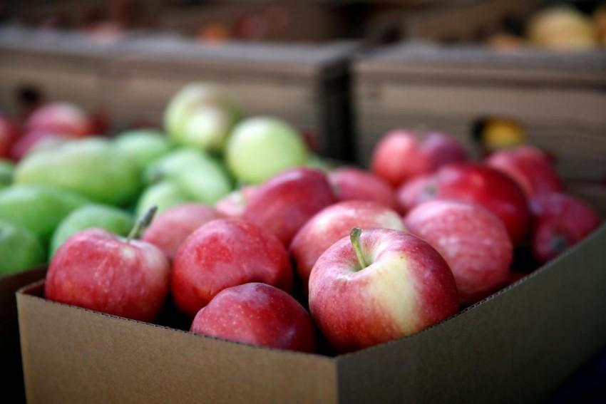 сортировка яблок для хранения