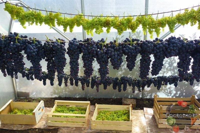 способы хранения винограда