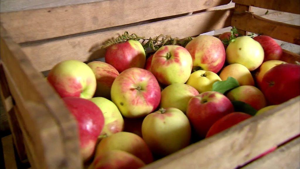 хранение яблок в квартире