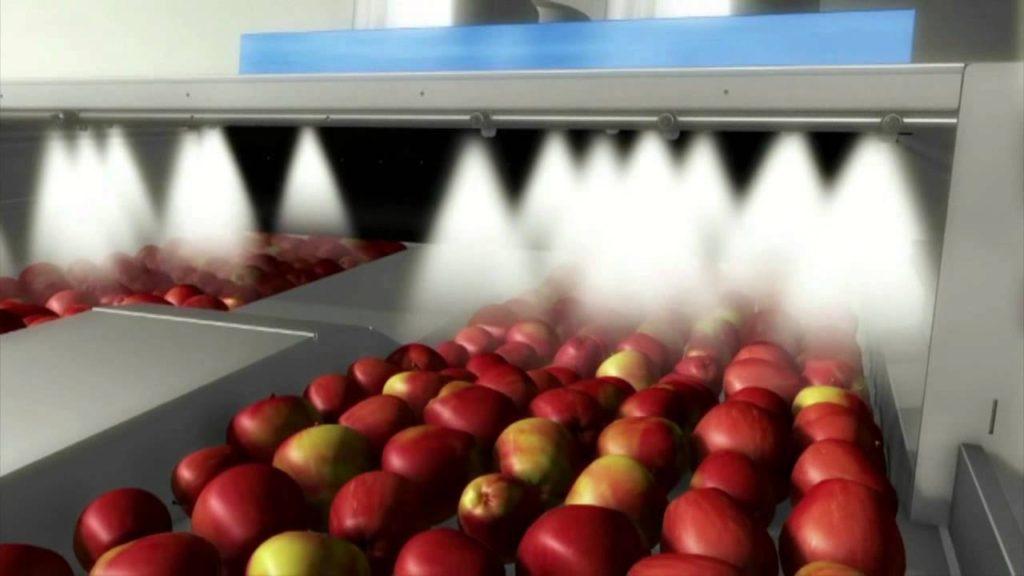 правила обработки яблок
