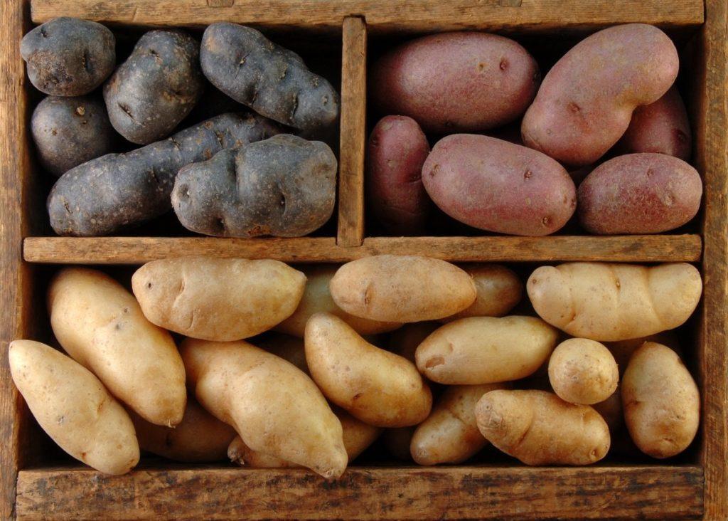 сорта картошки для хранения