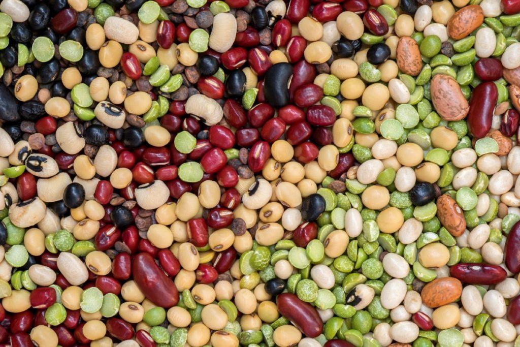 хранение семян бобов
