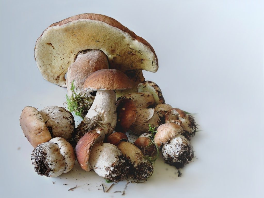 как сохранить белые грибы