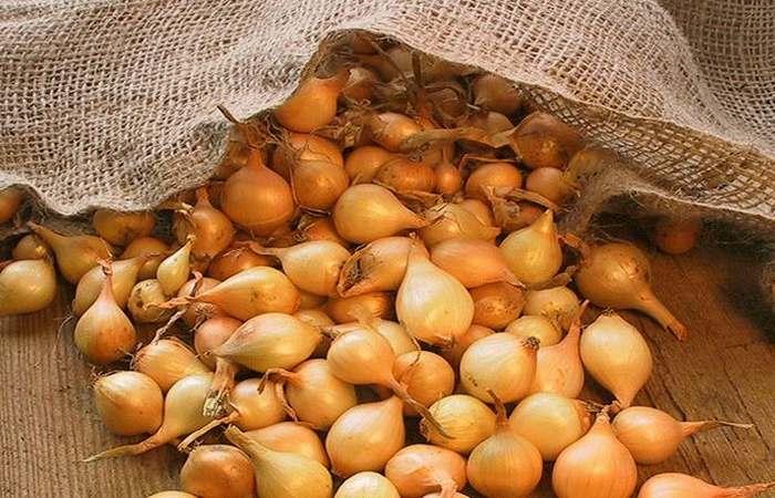 Как хранить лук севок