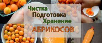 как сохранить абрикосы