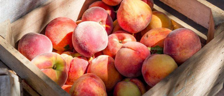 как хранить персики