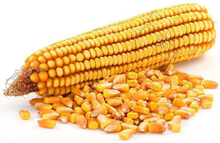 хранение сушенной кукурузы