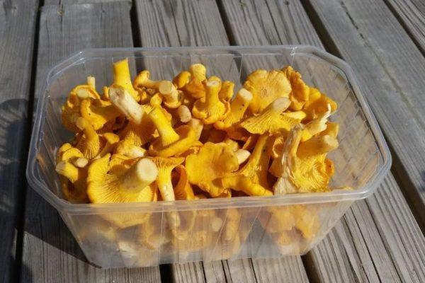 как хранить грибы лисички