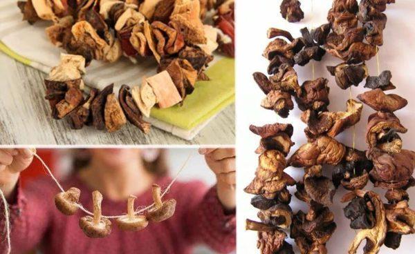 сколько хранить сушеные грибы