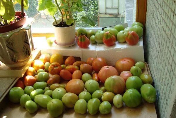 где хранят зеленые помидоры