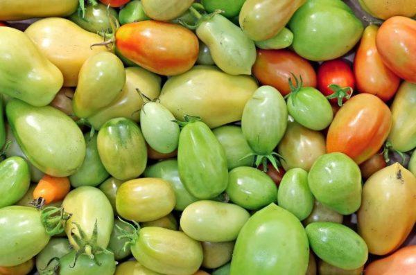 как хранить зеленые помидоры до покраснения