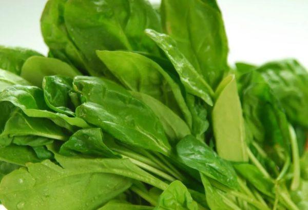 как хранить шпинат в холодильнике
