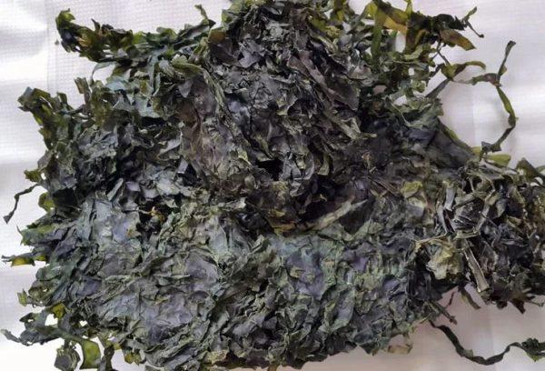 срок хранения морской капусты