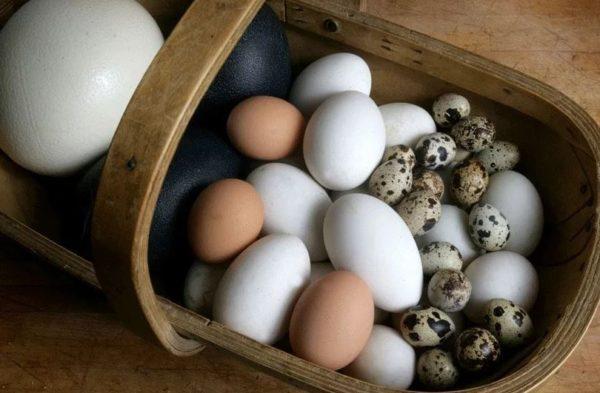 сколько можно хранить перепелиные яйца
