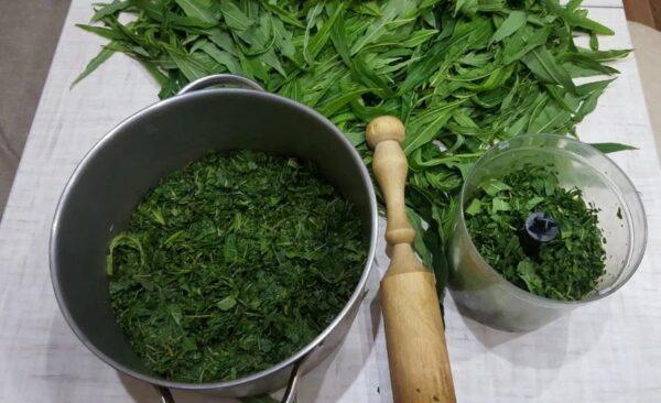 Правила сбора, заготовки и хранения иван-чая