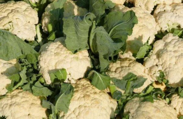 Как хранить цветную капусту, где лучше