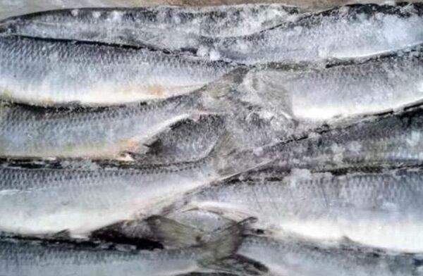 Правила хранения замороженной рыбы