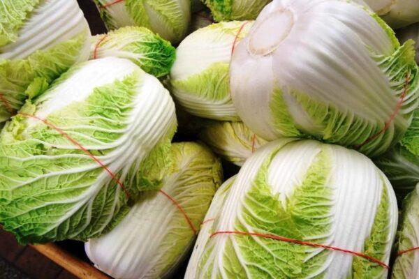 Правила и условия хранения пекинской капусты